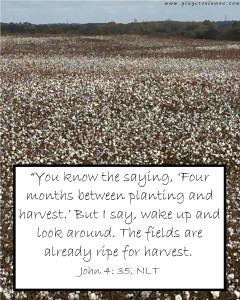 harvest 4 blog2